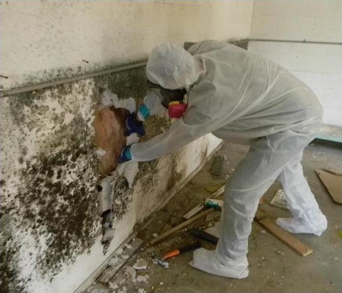 Common Types Of Mold In Homes
