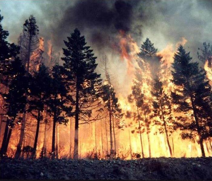 Fire Damage Wildfire Prevention and Safety Tips